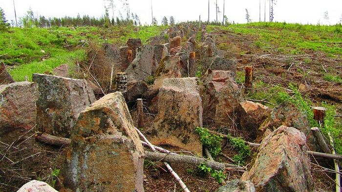 Надолбы бывших финских укреплений в районе «Линии Салпа».